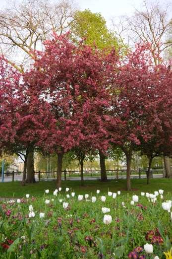 Christ's Piece's gardens, Cambridge