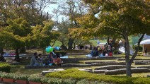 Families picnicking at the Chrysanthemum festival