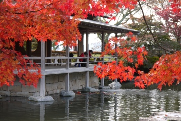 Autumn leaves viewing in Nishiyama Park, Sabae