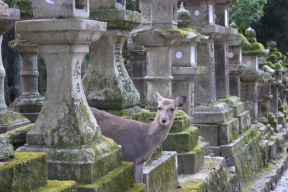 Deers and gods inhabit the pathways leading to the shrine.