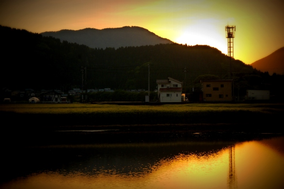 Sunset over ricefields, Fukui